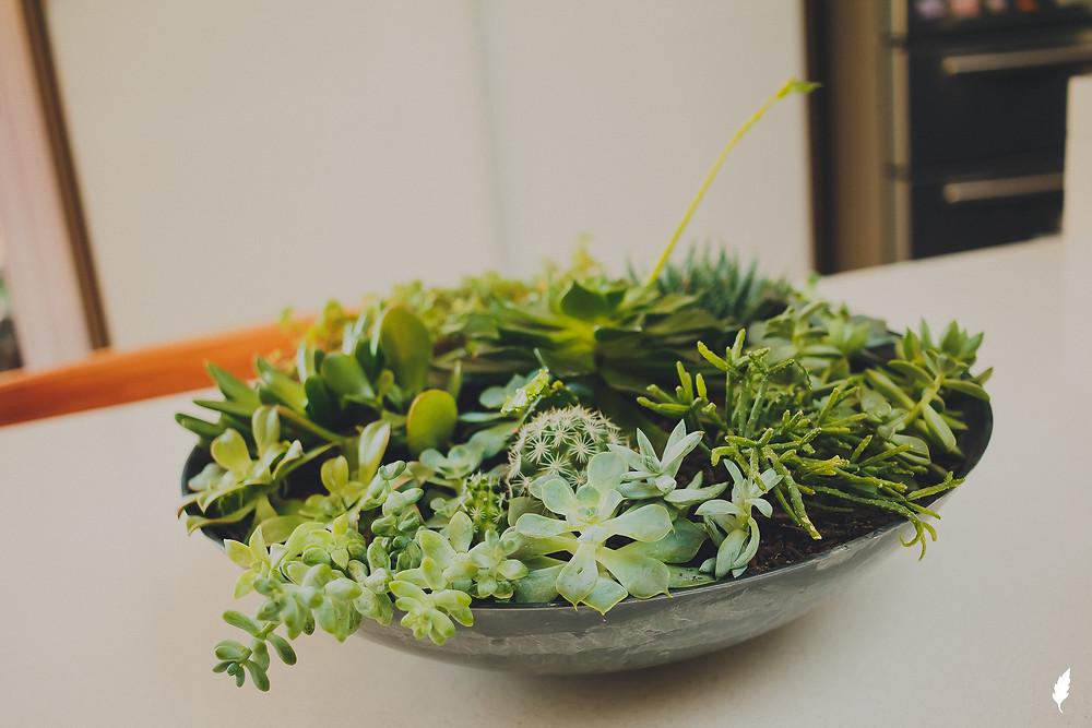 suculentas decoração de vaso