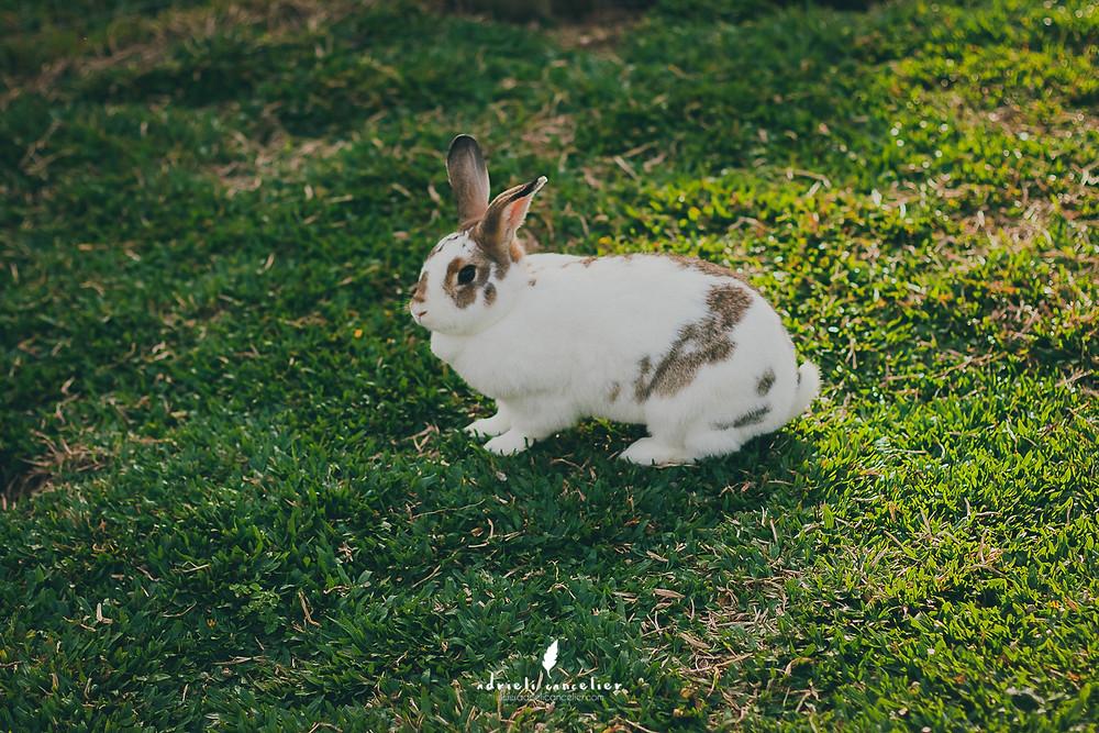 animais para criança em Curitiba coelho