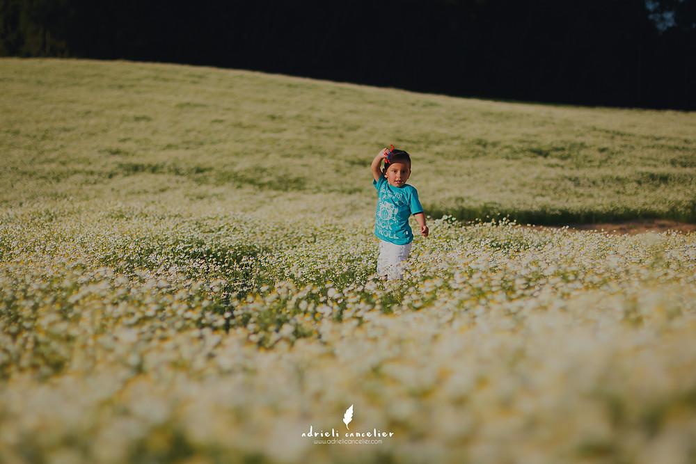 ensaio fotográfico no campo de camomila