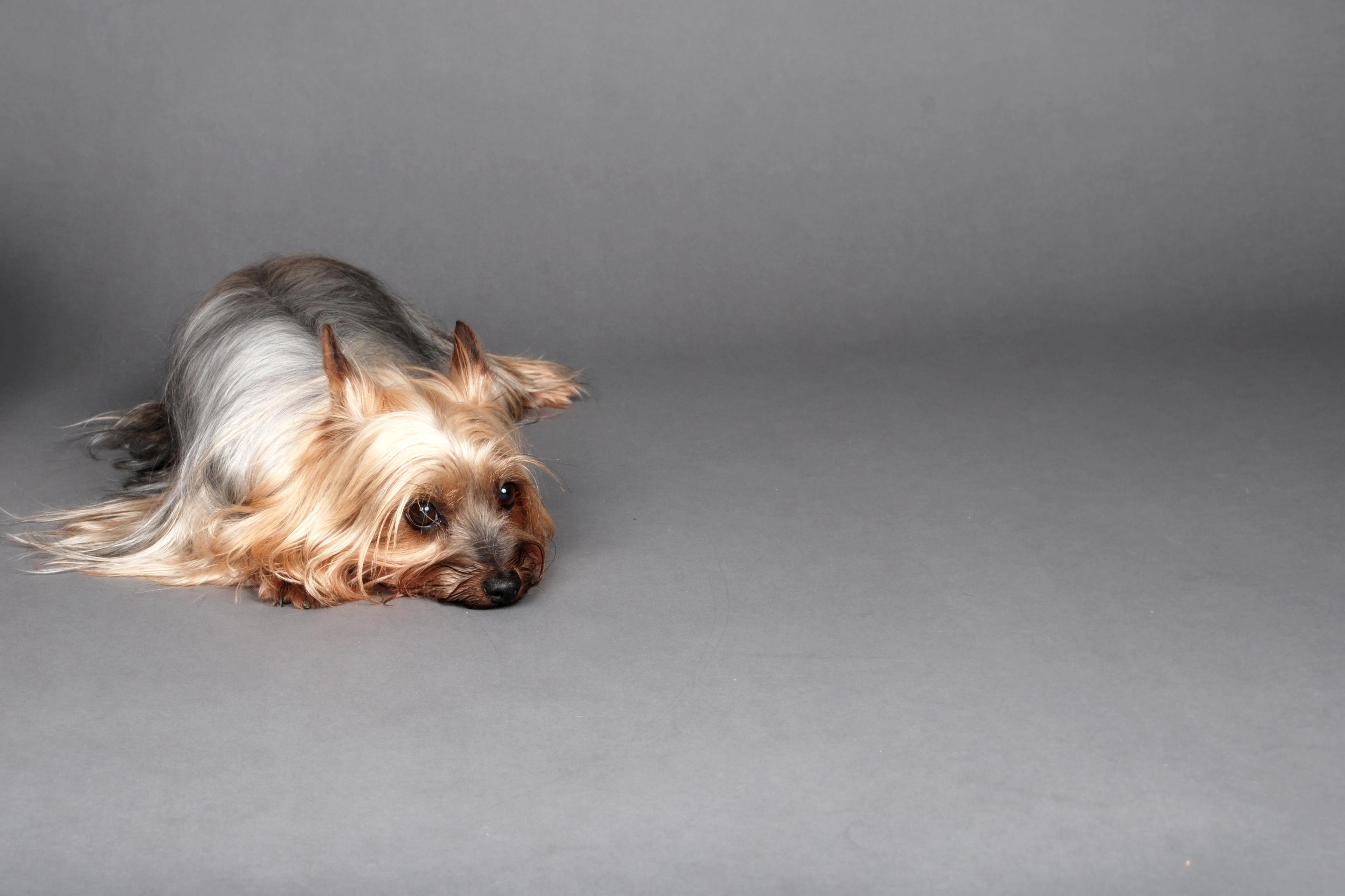 Sonya Cogan Dog Photography