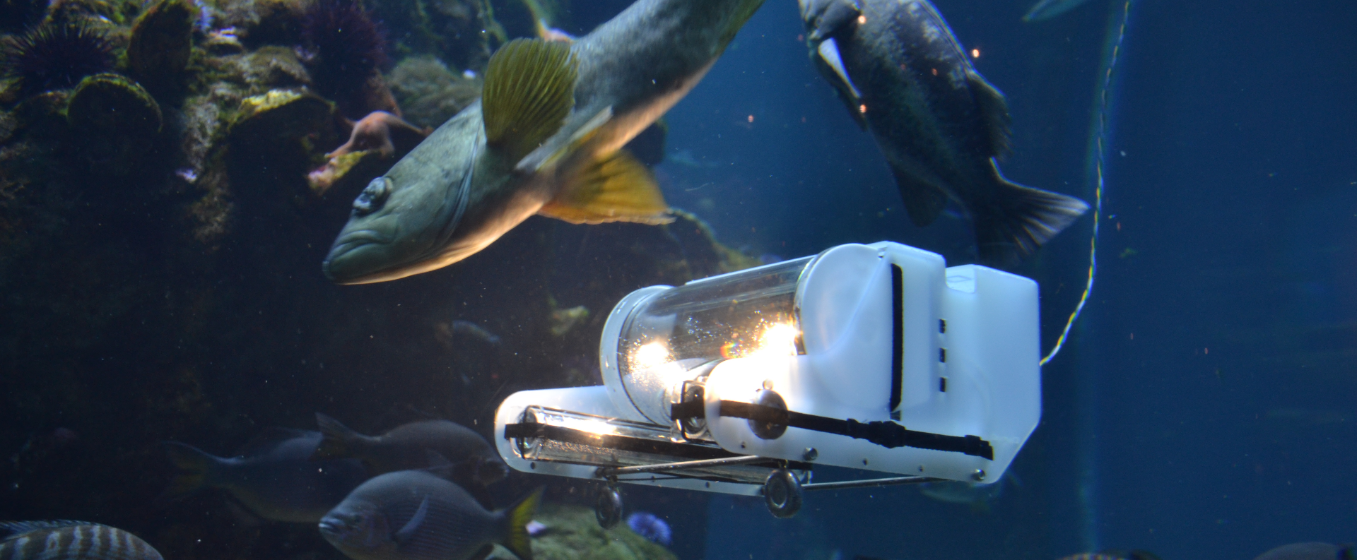 OpenROV used in GEECs programs