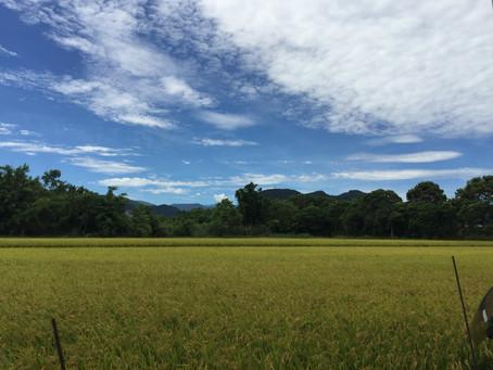 如何使台灣農業更有吸引力