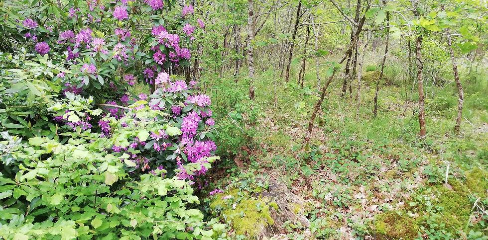baoln-jardin-cueillette.jpg