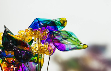 Translucent Florals