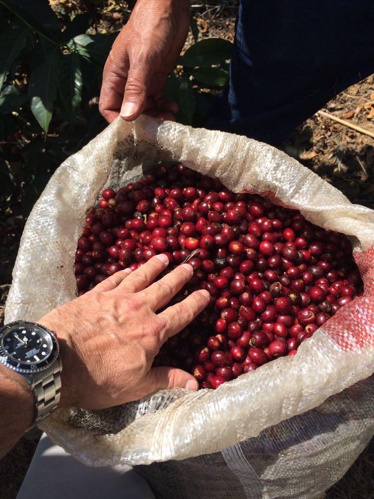 San Jose Ocana Coffee Cherry