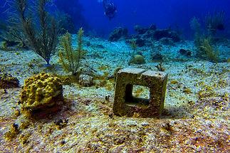 coral jungle -042.jpg