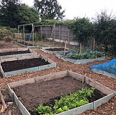 allotment project 7.jpg