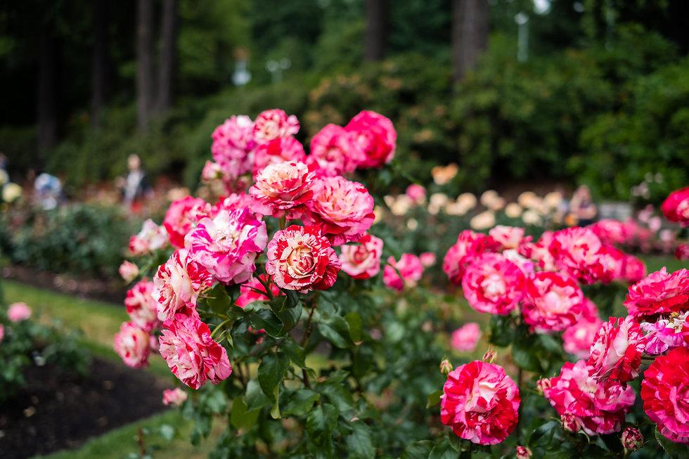 mktg-20192506-Rose-Garden-0012.JPG