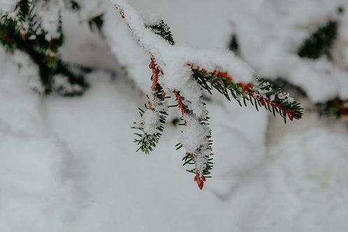 Print Sneeuw_8