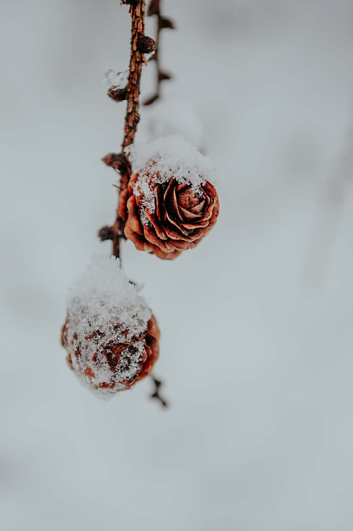 Print Sneeuw_12