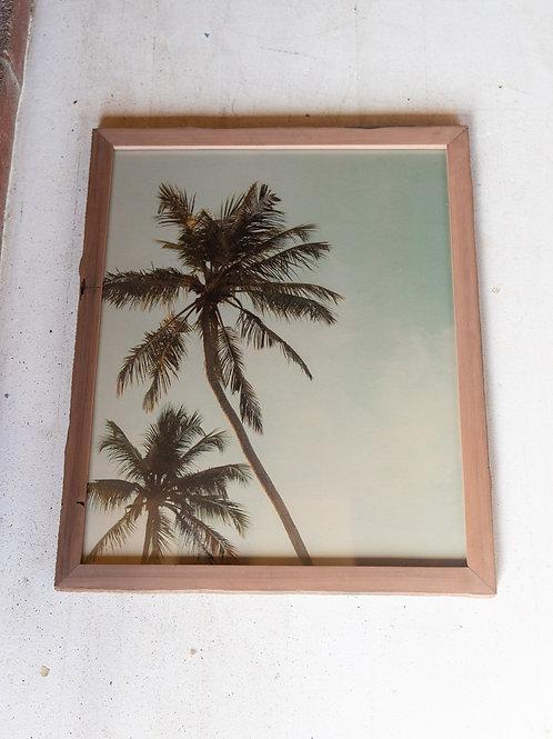 Hemp Palm framed print -  #6 21.5 x 17.5