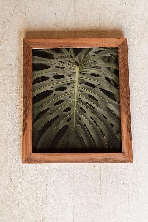 The Leaf 11 x 14