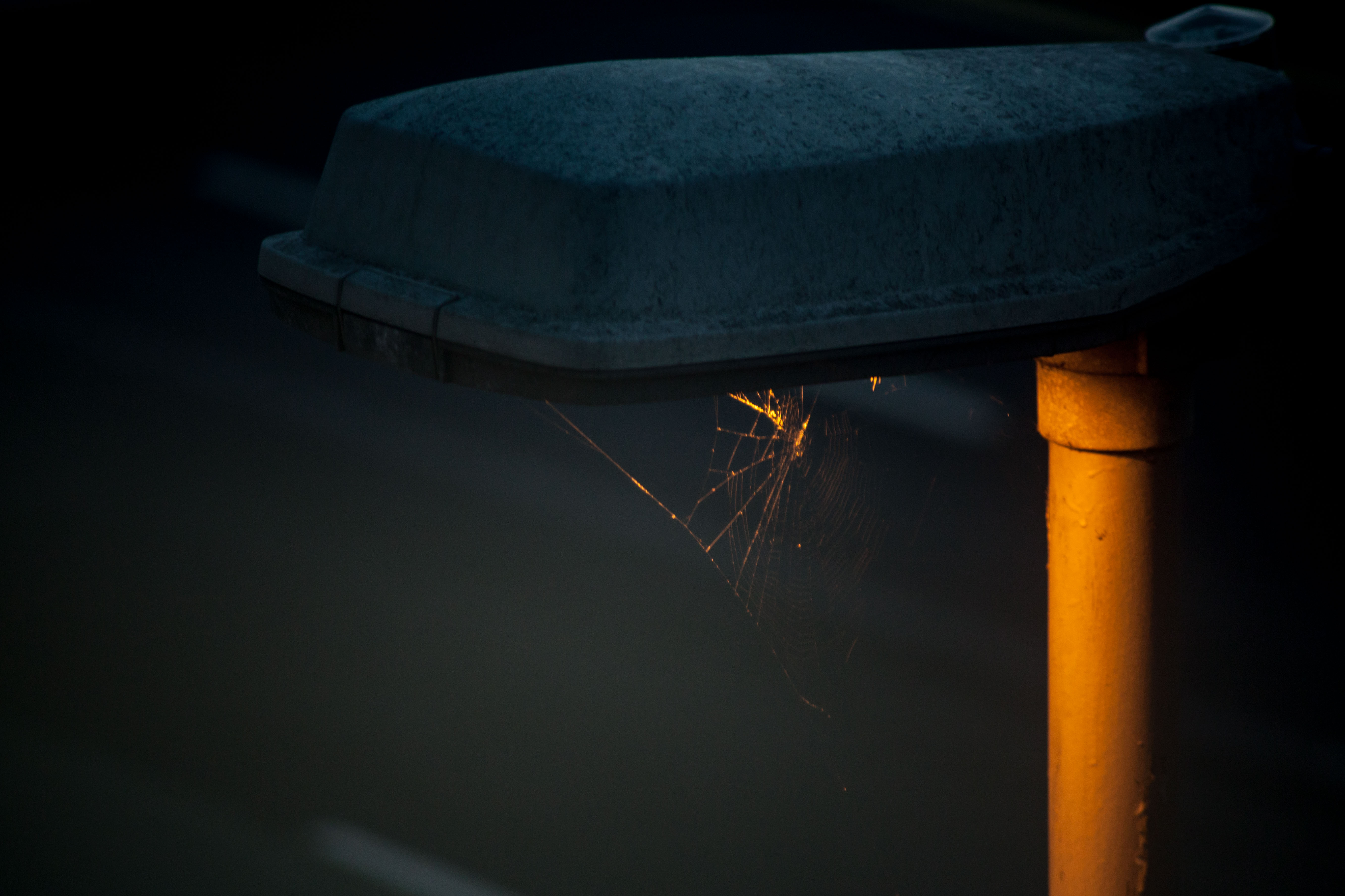 a bright spot for a spider's home