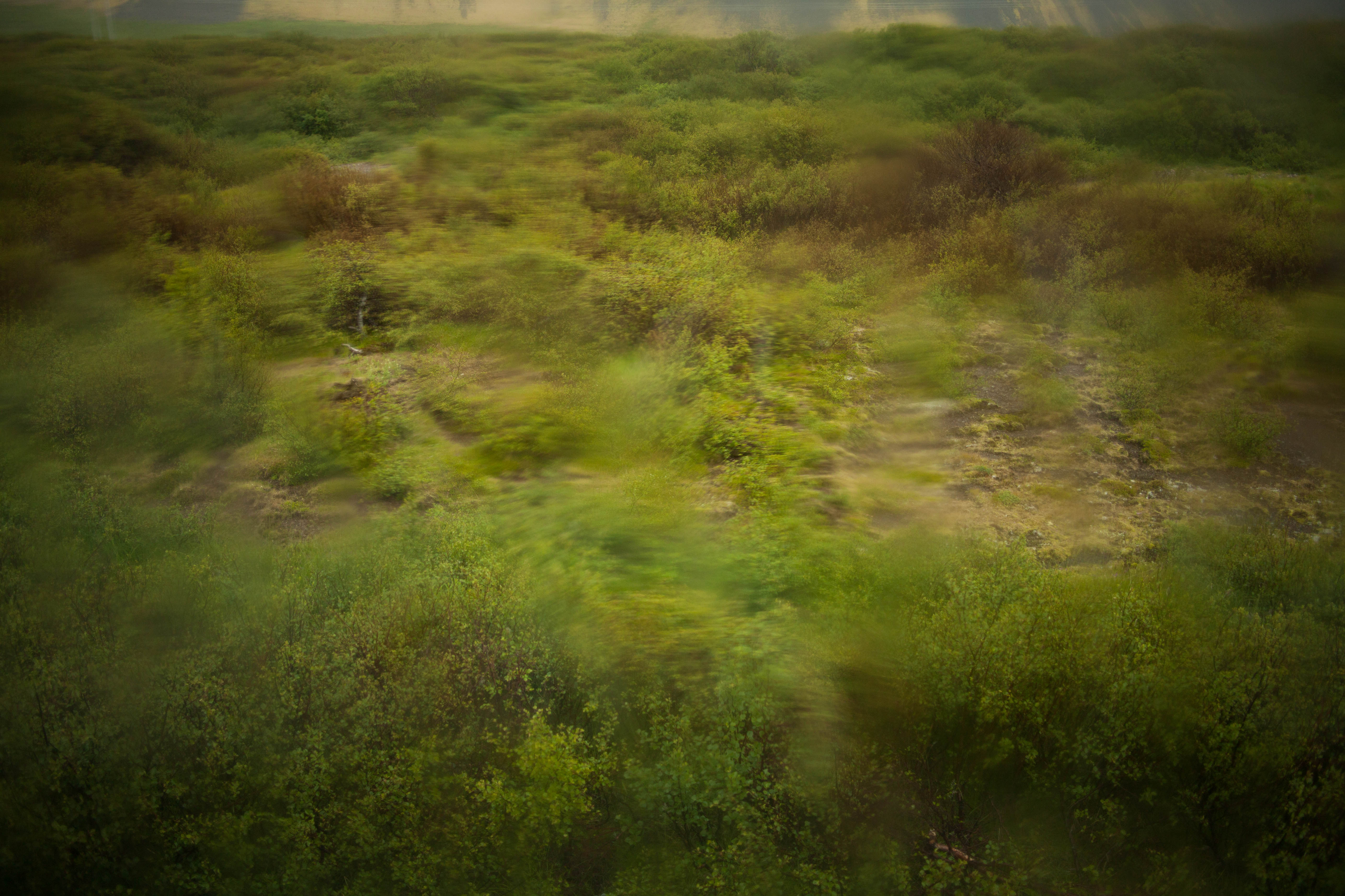 landscape through glass