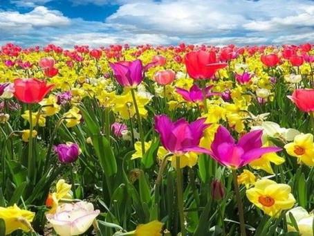 Cuida tus ojos en primavera
