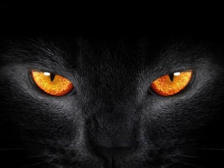 ¿Sabías qué? Curiosidades de los ojos de los animales