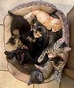 5-21-Kittensinbasket.jpg