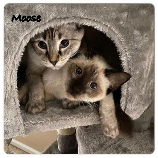 Nov-Moose.JPG
