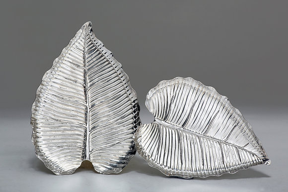 Silver Leaf - Elephant Ear