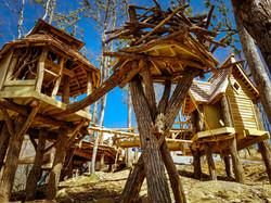 Birds Nest Build