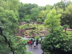 Zoo challenge course builder