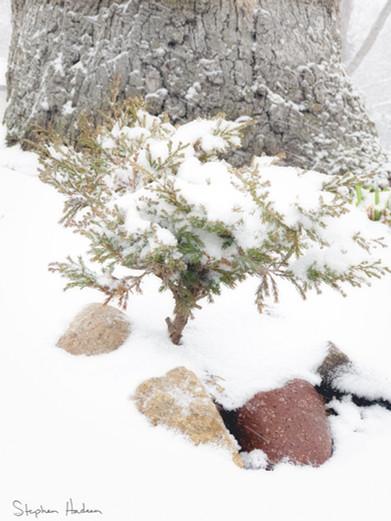 spring snowstorm 1