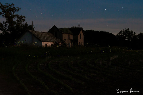 fireflies and farmhouse