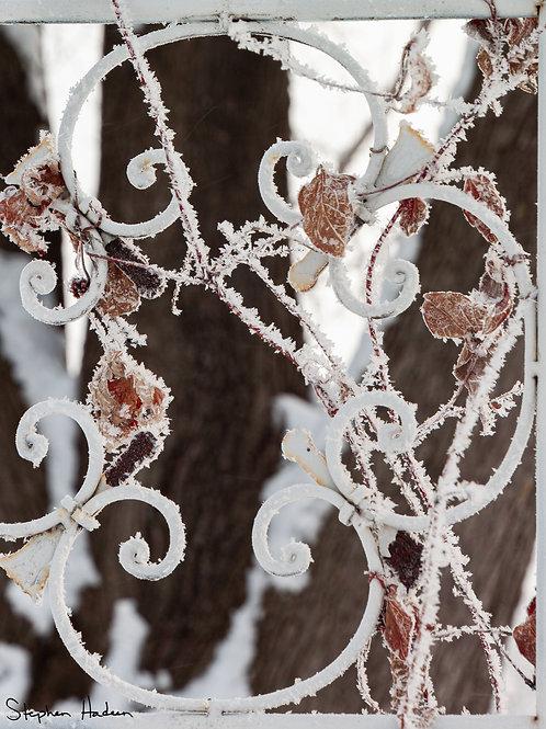 hoar frost scrollwork