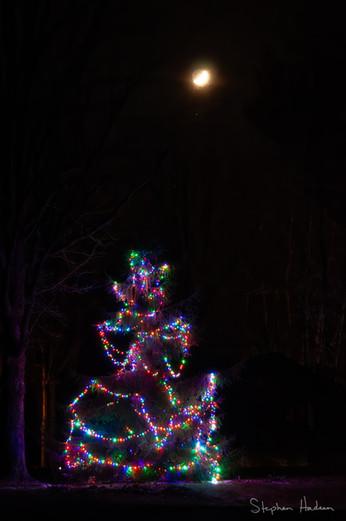 christmas on a spring night