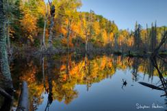 fall around beaver dam