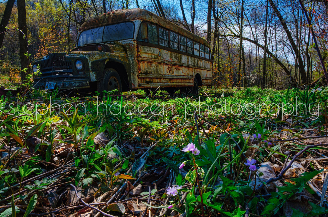 school bus and flower