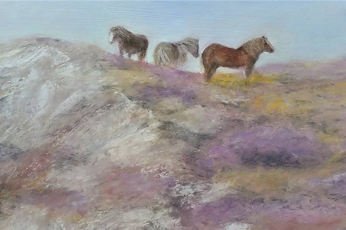 Welsh ponies on Conwy mountain