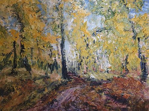 Dunphail Birch