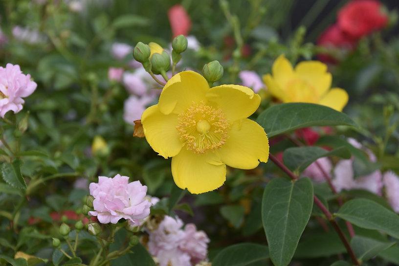 flower-4367300_1920.jpg