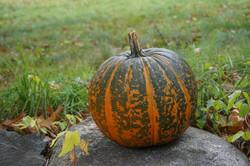 Distinctive Pumpkin