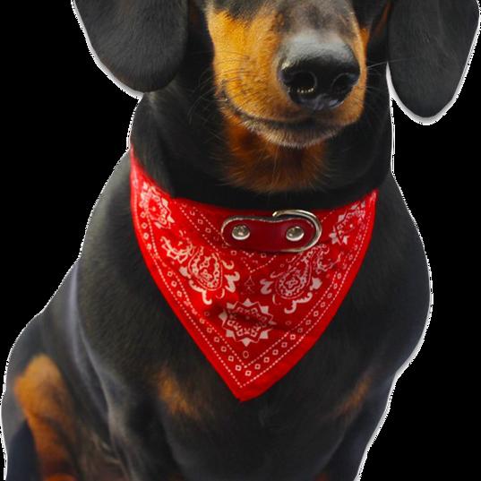 Dog Bandana 2.png