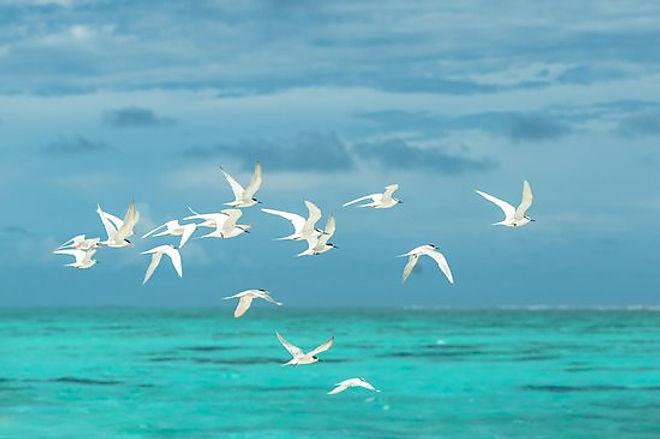 flying birds.jpg
