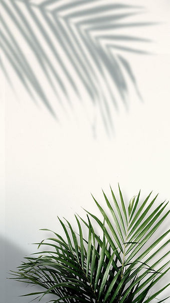Download free png of Palm leaf border de