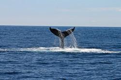 animal-daytime-deep-ocean-892548