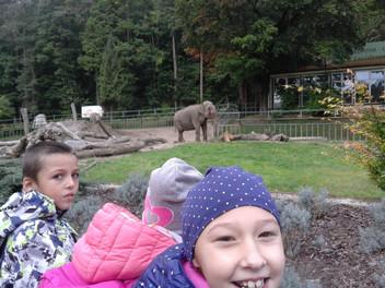 """Wycieczka do Zoo w ramach projektu """"JESIEŃ WŚRÓD ZWIERZĄT""""."""