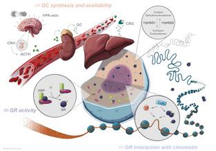 Illustration for a Scientific Article