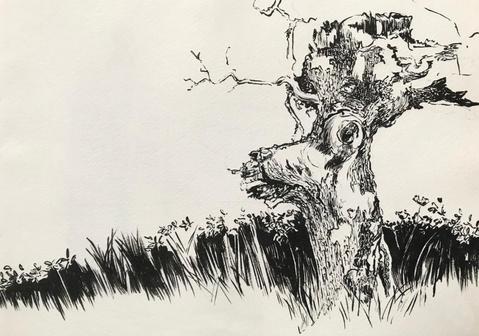 Árvore Veado