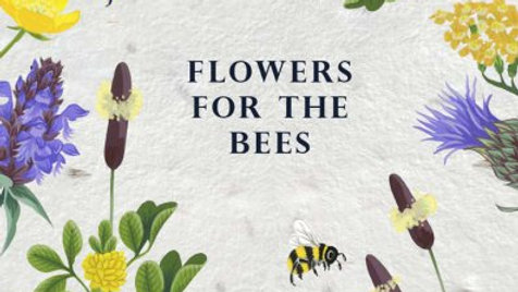 Greeting Cards of wildflower seeds