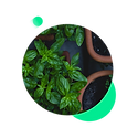Horticulture-Icon.png