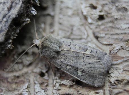 Very few moths last night.