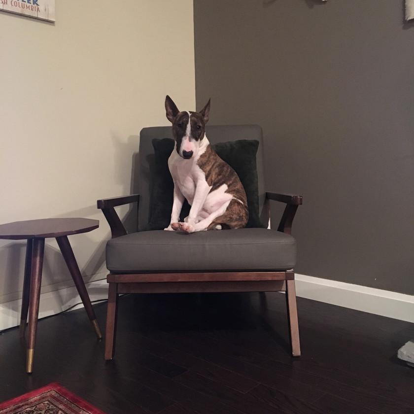 Finally home! Bean's chair (ran to it immediately)