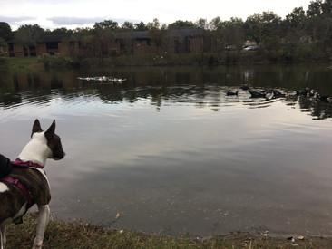 Day 5: Gainesville FL (Bean sees weird ducks)