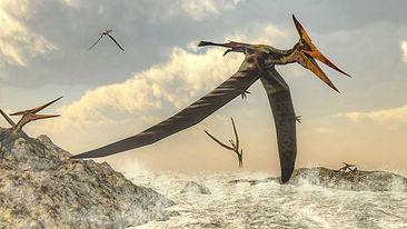 pteranodon-bird-flying-above-ocean--5943