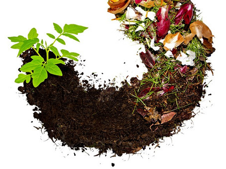 Why should we recycle organic waste?