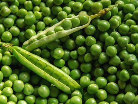 5 Joburg Frost Loving Vegetables